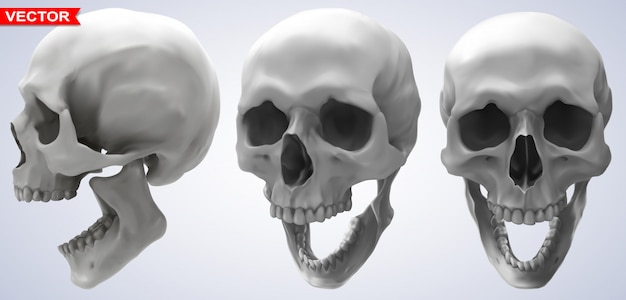 詳細なグラフィック写実的な人間の頭蓋骨セット Premiumベクター