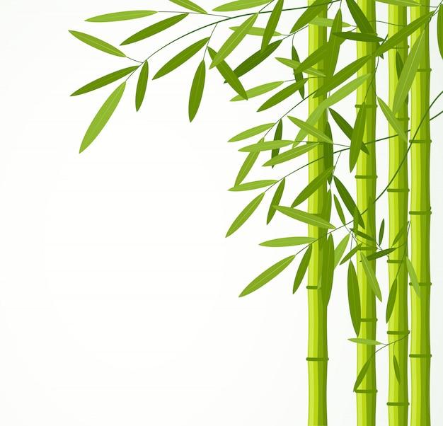 Зеленые бамбуковые стебли с листьями, изолированные на белом фоне. Premium векторы