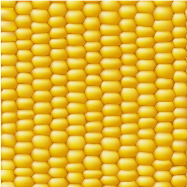 Кукурузный вектор бесшовные реалистичные текстуры Бесплатные векторы