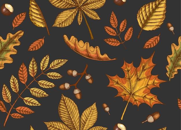 手で秋のシームレスパターンは、カエデ、白樺、栗、ドングリ、灰の木、黒のオークの葉を描かれています。スケッチ。壁紙用 Premiumベクター