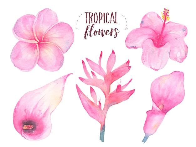 水彩の手描きの熱帯の花フランジパニハイビスカスオランダカイウユリセット白で隔離 無料ベクター