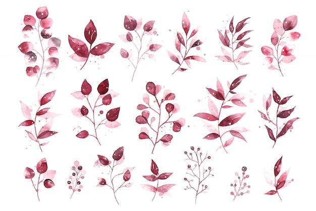 Акварельные тропические бордовые бордовые листья изолированы Бесплатные векторы