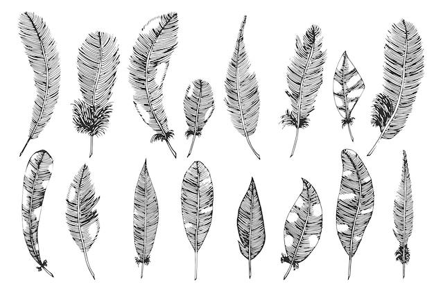 Ручной обращается с перьями чернил. векторная иллюстрация, эскиз. Бесплатные векторы