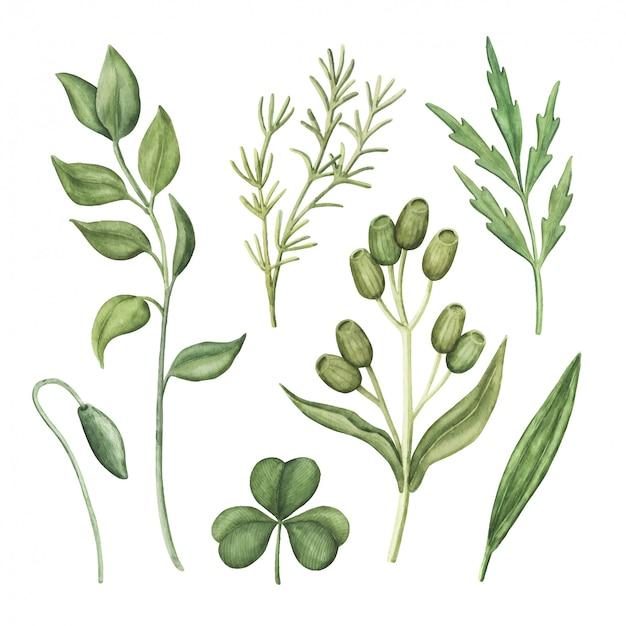 水彩の緑、緑のハーブと植物のセット Premiumベクター