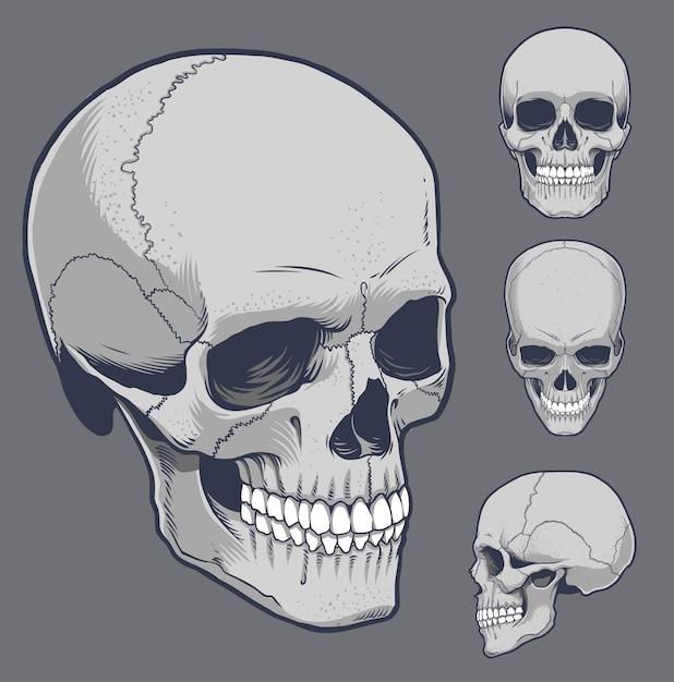 さまざまな角度で人間の頭蓋骨 Premiumベクター