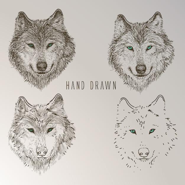 Коллекция нарисованных от руки волка Бесплатные векторы