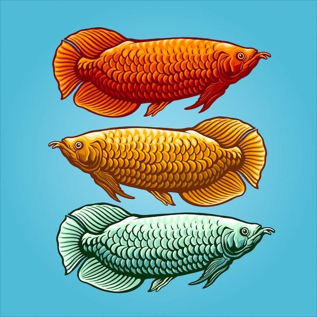 アロワナ魚のイラスト Premiumベクター