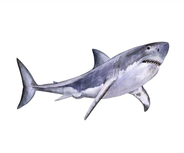 水彩の白いサメ。水彩 Premiumベクター