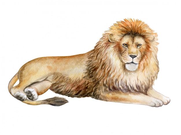 水彩のライオン Premiumベクター