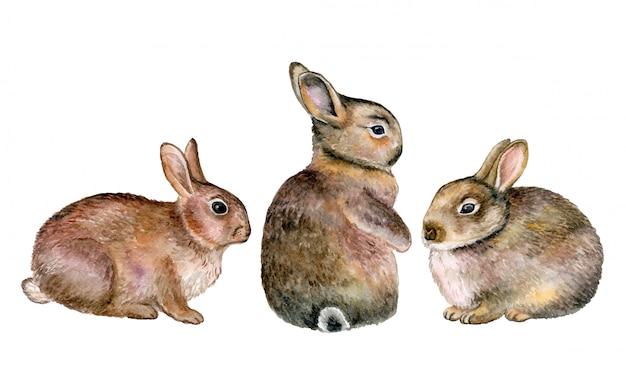 灰色のウサギ、水彩のノウサギ Premiumベクター