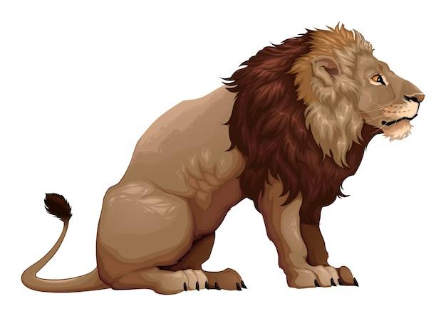座っているライオンの概要ベクトル漫画のイラスト ベクター画像