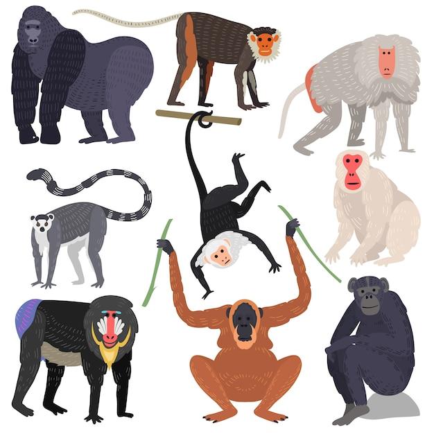 Разные виды обезьян редких животных установлены. Premium векторы