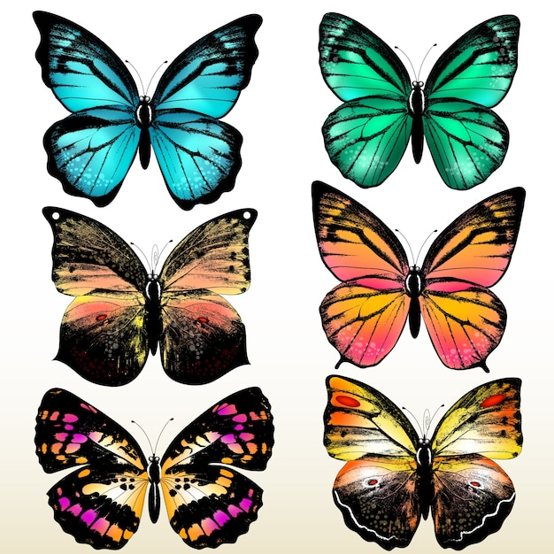 Картинка для печати бабочки