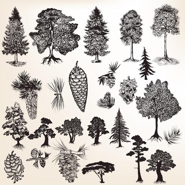 松ぼっくりと木のコレクション Premiumベクター
