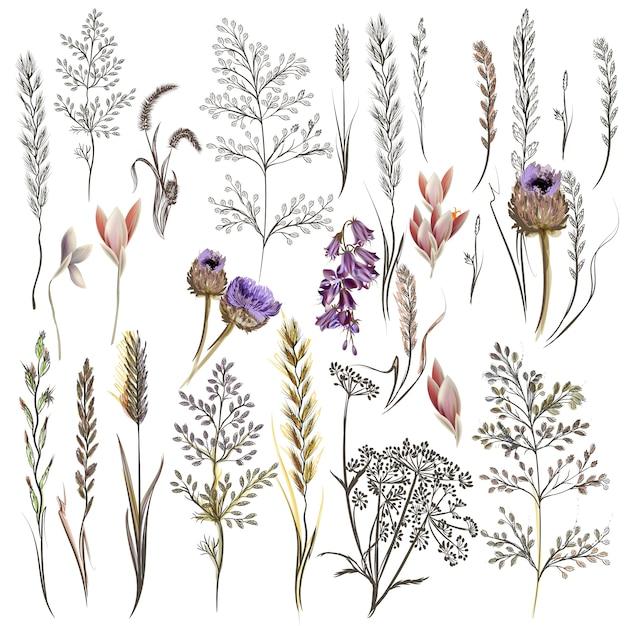 Коллекция красивых цветов Бесплатные векторы