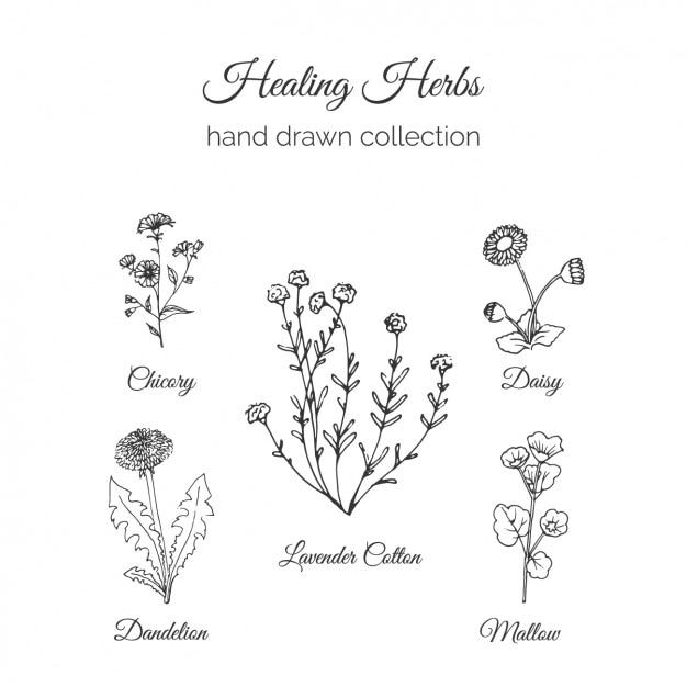 手描きの花コレクション 無料ベクター