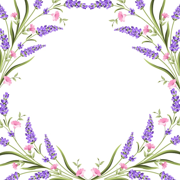 ラベンダーの花を持つエレガントなカード。 Premiumベクター