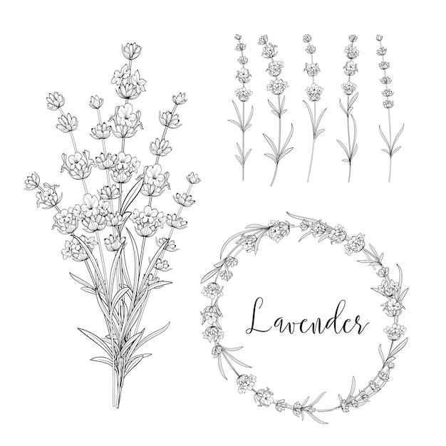Ботанический пакет иллюстраций. Premium векторы