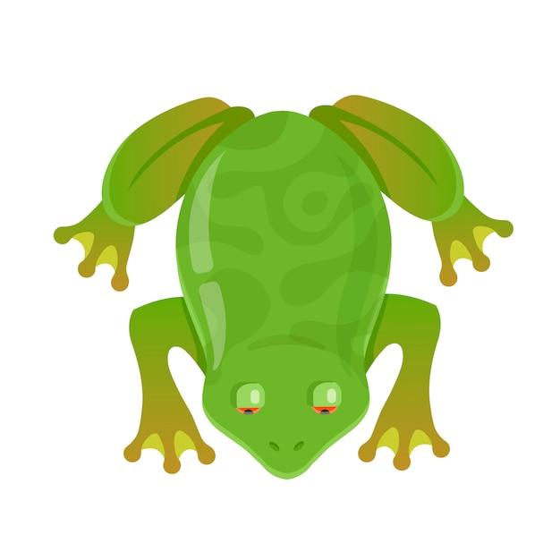 Зеленая лягушка с красными глазами. символ векторные иллюстрации. вид сверху Premium векторы