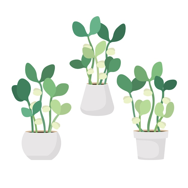 白い鍋の若い新鮮な緑の芽ベクトルイラスト Premiumベクター