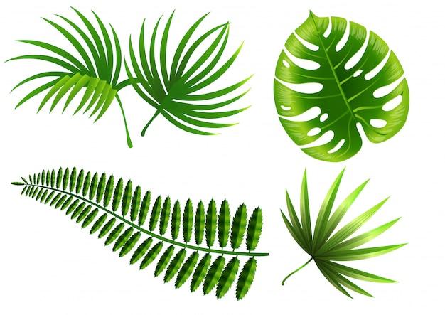 熱帯植物が葉っぱになる。モンステラ、シダ、ヤシ、ユッカ。 無料ベクター