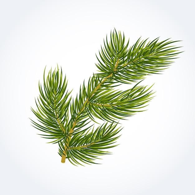 緑のモミの木の小枝 無料ベクター