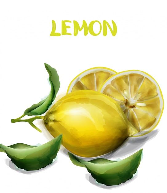 レモンの孤立した水彩画 Premiumベクター
