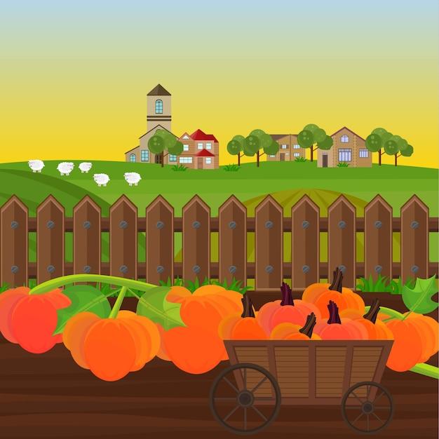カボチャの庭のカボチャの収穫ベクトル。田舎のイラスト Premiumベクター