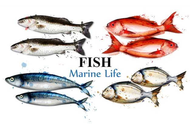 Акварельная разноцветная коллекция рыб Premium векторы