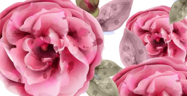 ピンクのバラの水彩画の背景 Premiumベクター