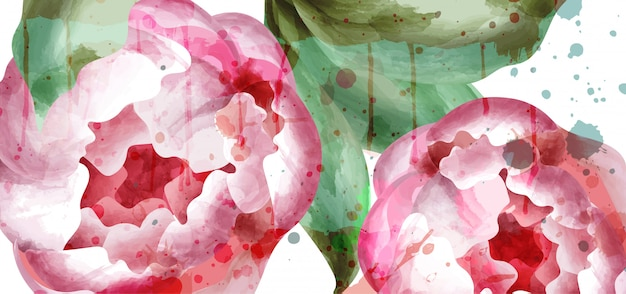 Пион цветы акварельный фон Premium векторы