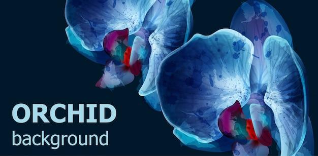 青い蘭の水彩画の背景 Premiumベクター