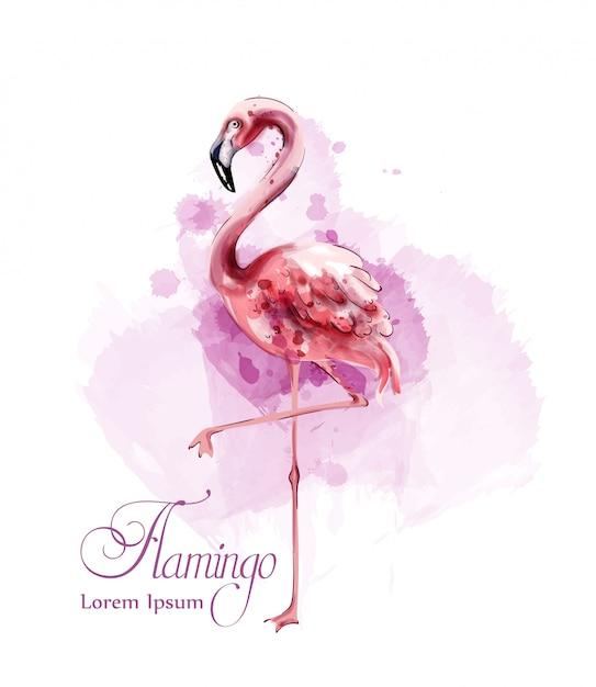 Фламинго акварель Premium векторы