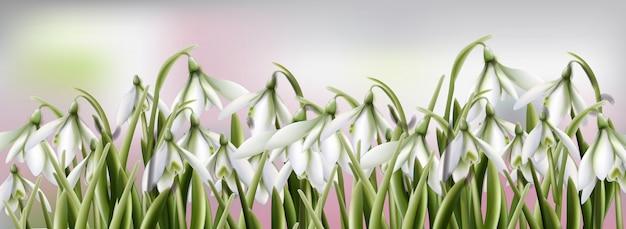 スノードロップの花の水彩画 Premiumベクター
