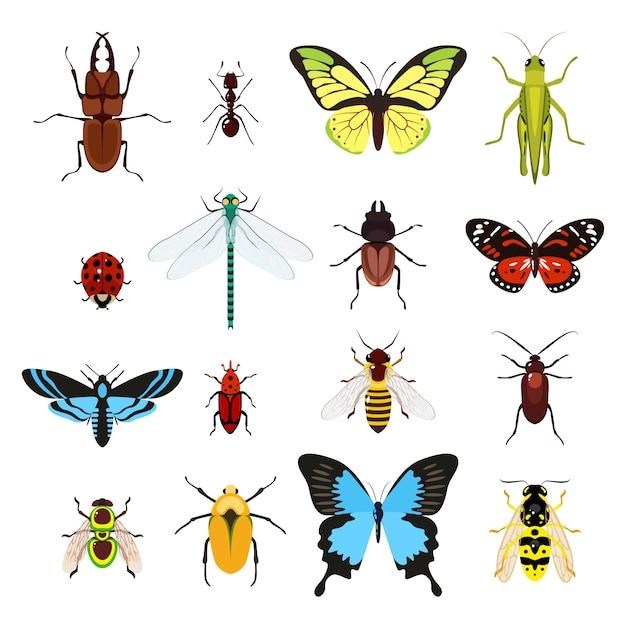 異なる昆虫のセット 無料ベクター