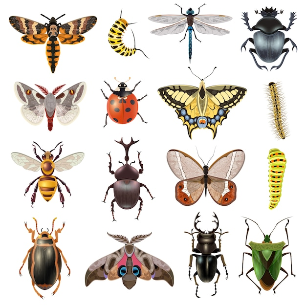 Набор иконок насекомых Бесплатные векторы