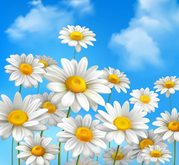Белые ромашки цветы ромашки Бесплатные векторы