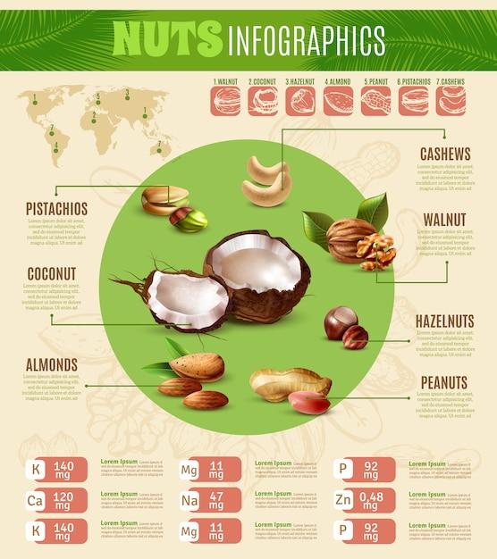 現実的なナッツのインフォグラフィック 無料ベクター