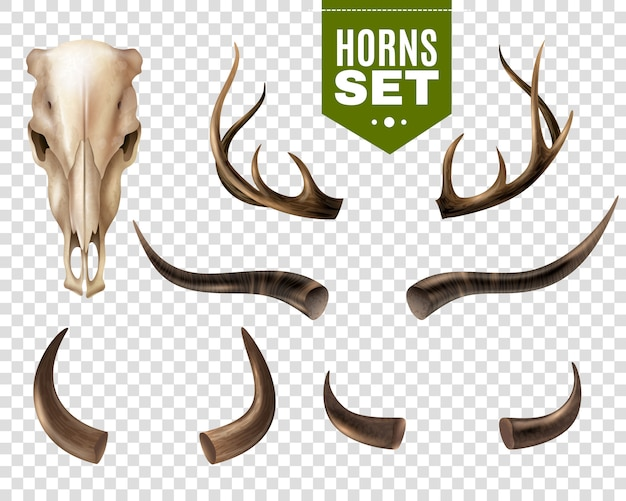 牛の頭蓋骨と角セット 無料ベクター