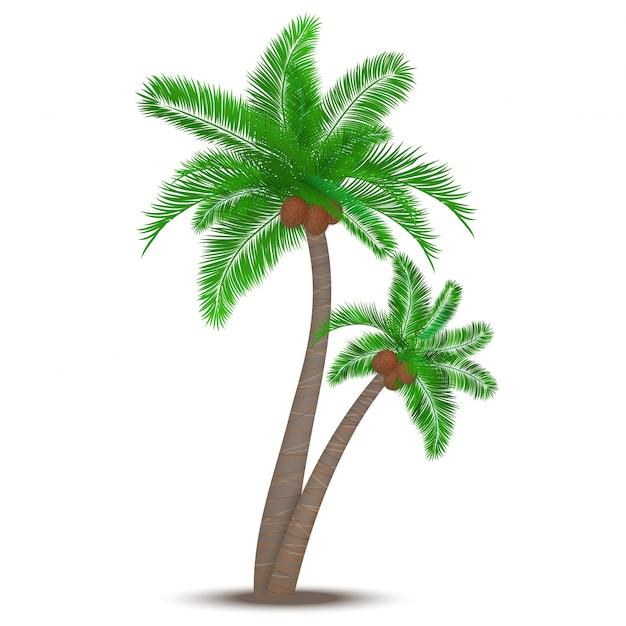 ココナッツシンボルと熱帯ヤシの木は、ベクトル図を고립 無料ベクター