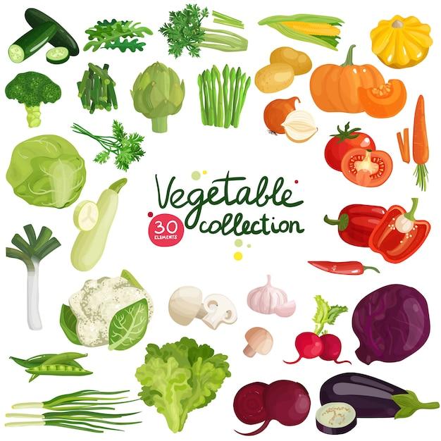 Коллекция овощей и трав Бесплатные векторы