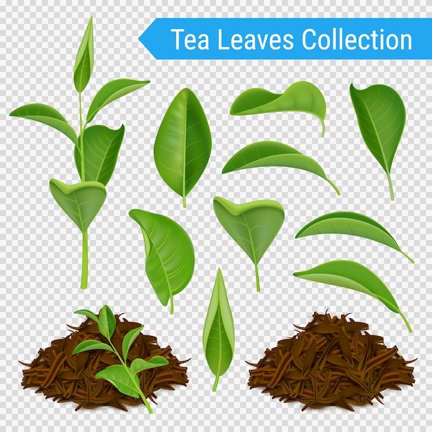 現実的な茶葉透明セット 無料ベクター