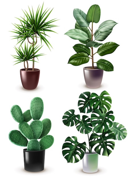 現実的な観葉植物のアイコンを設定 無料ベクター