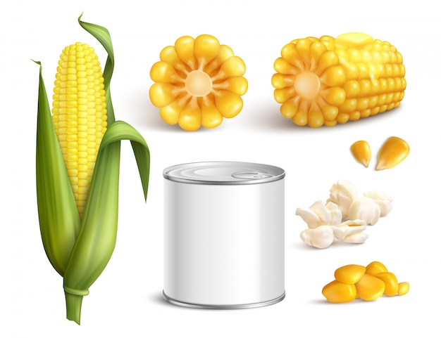 Кукуруза реалистичный набор Бесплатные векторы