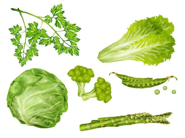 Набор зеленых овощей Premium векторы