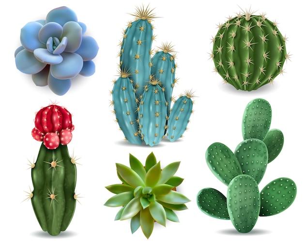 Популярные комнатные растения элементы и суккуленты розеток сортов, включая кактус подушку булавки реалистичные коллекции изолированных вектор коллекции Бесплатные векторы