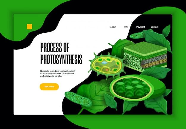 緑の葉の光変換葉緑体構造を持つ光合成概念教育ウェブサイトバナーデザインのプロセス 無料ベクター