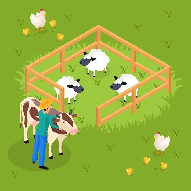 Обычные фермеры жизнь изометрии с крупного рогатого скота и сельскохозяйственных животных овчарню и человеческий характер охватывает корову иллюстрации Бесплатные векторы