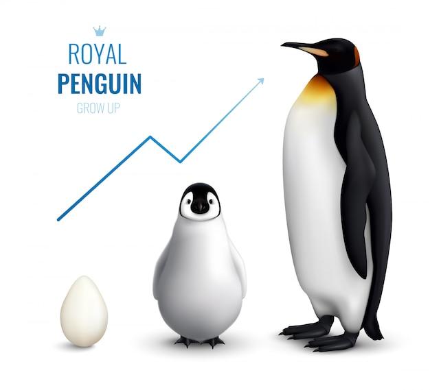 Цикл жизни королевских пингвинов реалистичен для взрослой яйцеклетки и показывает рост стрелка вверх Бесплатные векторы