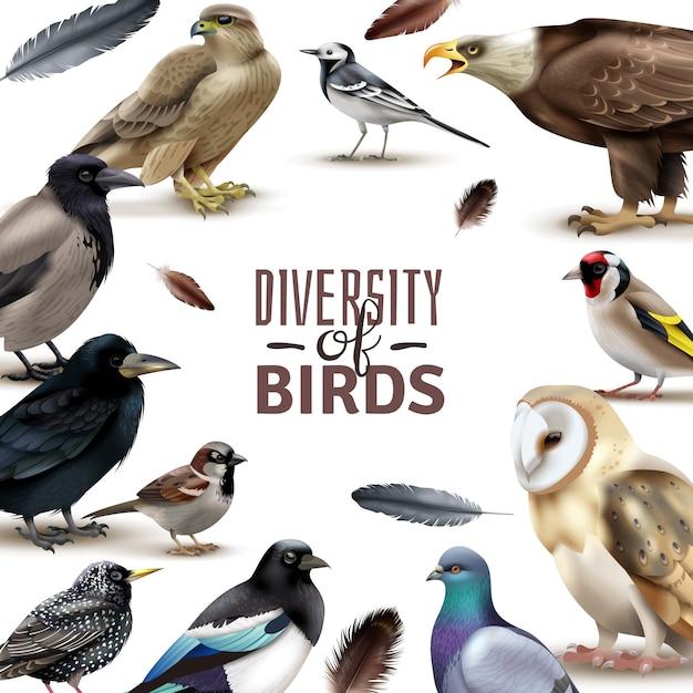 編集可能な華やかなテキストを取り巻くさまざまな種のリアルな鳥のカラフルな画像で鳥のフレーム 無料ベクター
